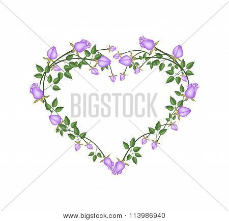 Beautiful Purple Roses Flowers in Heart Shape