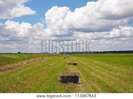 Rectangular bales of hay