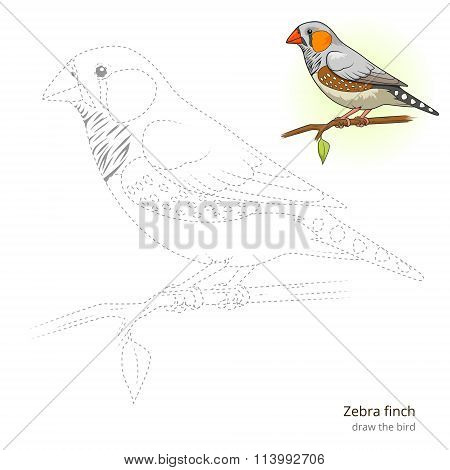 Zebra finch bird learn to draw vector