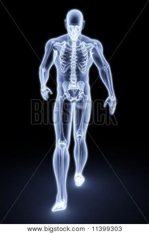 Human Xray