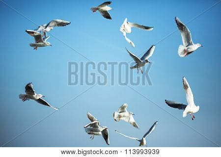 The Sun Is Shining And Seagulls Flying In A Group In The Blue Sky.