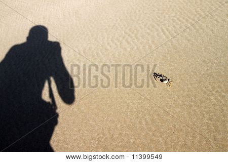 Photographing crab