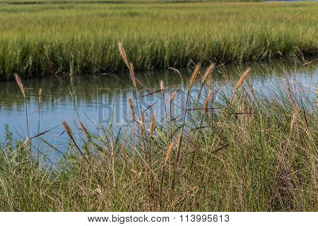 Foliage and Marshland at Pleasure House Point in Virginia Beach