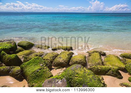 seaweed covered rocks on Atlantic coast at Dominican Republic