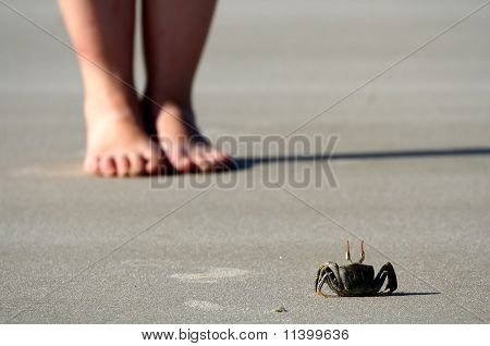 Crab in front of obstacle