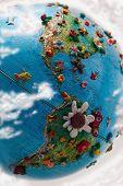 Flowered Globe America