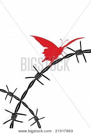 Barbed Wire And Butterfly