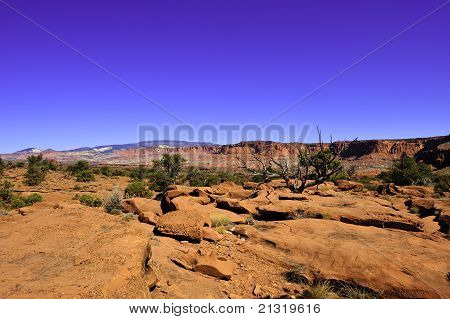 Red Rocks And Desert