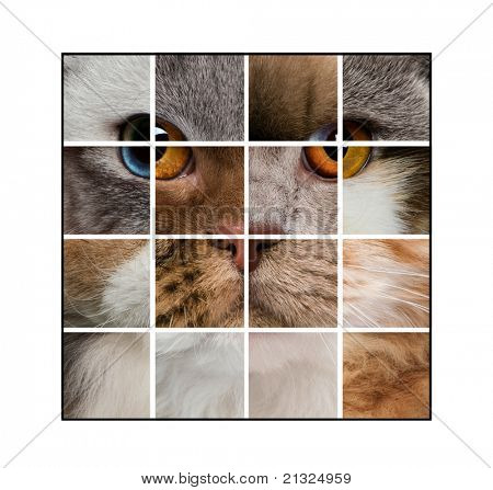 Photo composition of a cat's head made with various cats, in front of white background