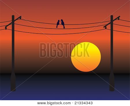 Birds On Wires Over Sunset Sky