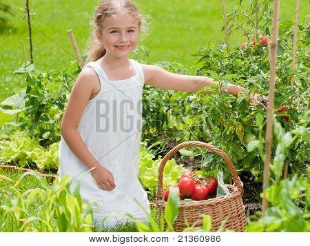 Beautiful gardener - little girl picking organic tomatoes