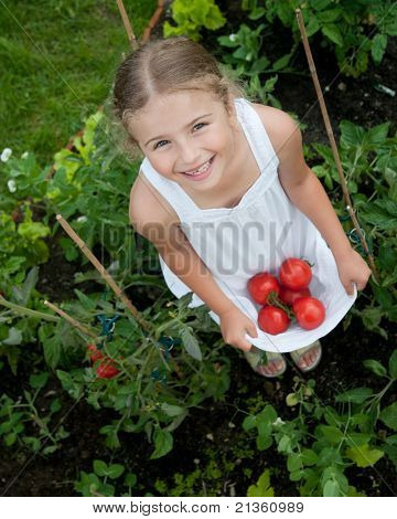 Vegetable garden - little gardener with harvests of organic tomatoes