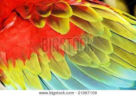 Close up colourful wings of macaw