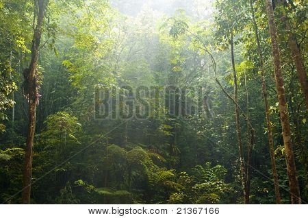 green forest with morning sunlight