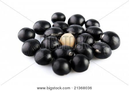 A single soy bean among black beans