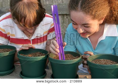 Planting Together