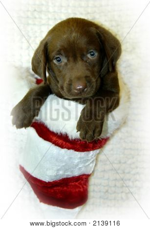 Christmas Stocking Lab