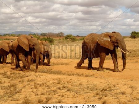 Elefantes na natureza