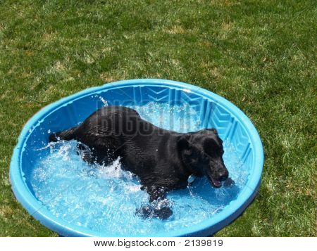Me And My Pool