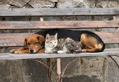 image of cat dog  - Cat and dog are resting together they are friends - JPG