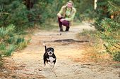 Game Of Run A Small Chihuahua.baby Girl Outdoors With A Small Dog. poster