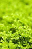 green ferns closeup