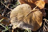 Frosted Leaf Surface Texture. Frost Ice On Forest Morning. Natural Floral Pattern Background. Macro poster
