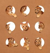 Cute little orange tabby kittens playing in a cardboard box poster