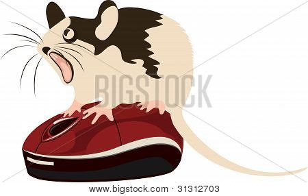 Mouse Sitting On Top Of The Computer Mouse, Vector Illustration