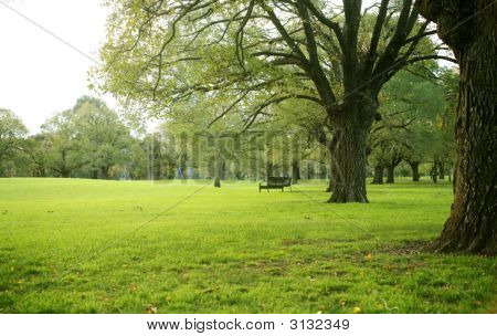 Green  Tree  With  Freshly Lawn Grass