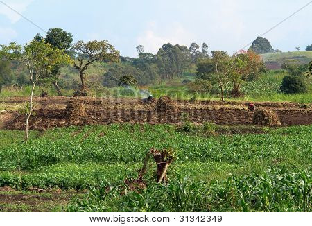 Agriculture Near Rwenzori Mountains