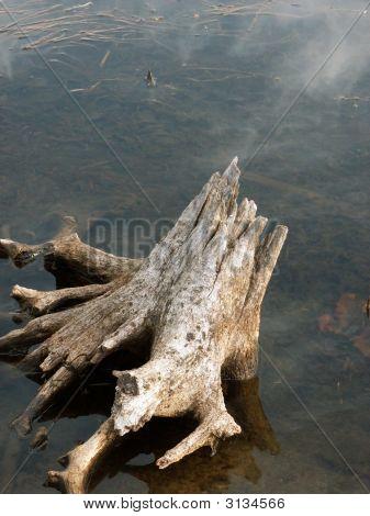 Stump In Lake