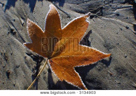Frosted maple