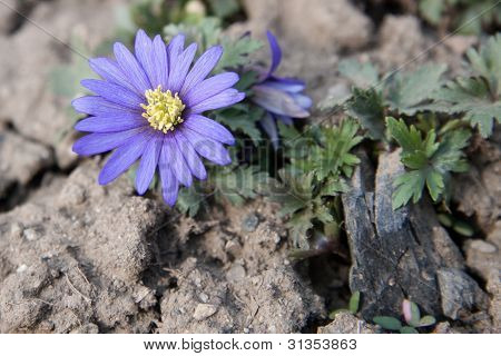flower on dried and cracked land
