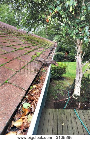 Clogged Rain Gutter And Mossy Roof
