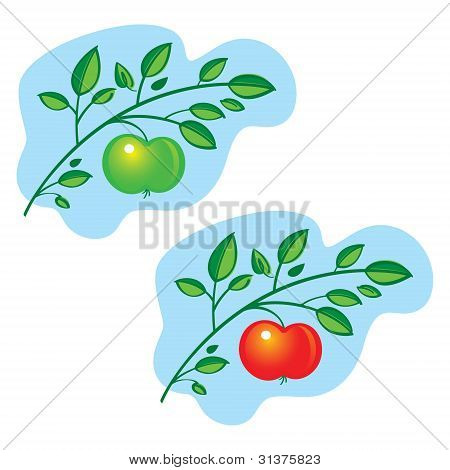 Apple Tree Branch