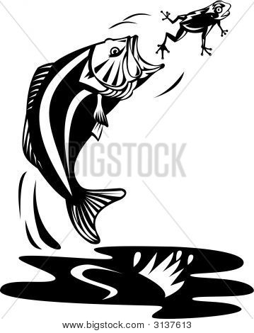 Bass Jumping To Catch Frog