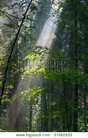 Sunny Morning In The Forest