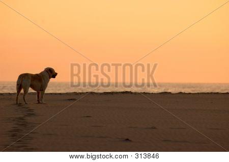 Oso Beach Bummin