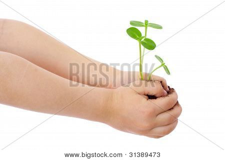 Sprouts in child's hands