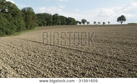 Pictoral Plowed Field And Trees
