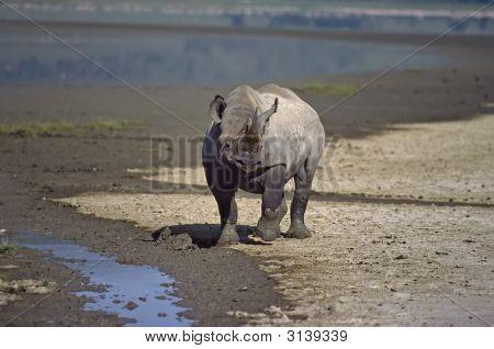 Africa-Rhinocerous