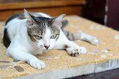 Moody Cat, Thai Cat, The Cat Is Waiting Upset. poster
