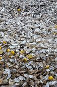 Thousands Of Empty Shells Of Eaten Oysters Discarded On Sea Floor In Cancale, Famous For Oyster Farm poster