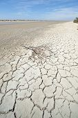 foto of marshlands  - The dried ground in the marshlands of the Camargue in southern France - JPG