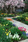 picture of profusion  - A house with a very profuse collection of tulips in the front yard - JPG