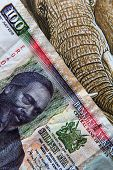 foto of shilling  - 100 shilling bill of Kenya and detail of elephant - JPG