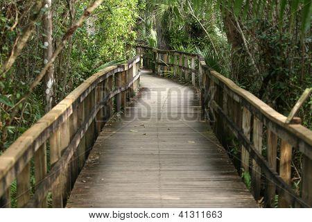 nature reserve boardwalk