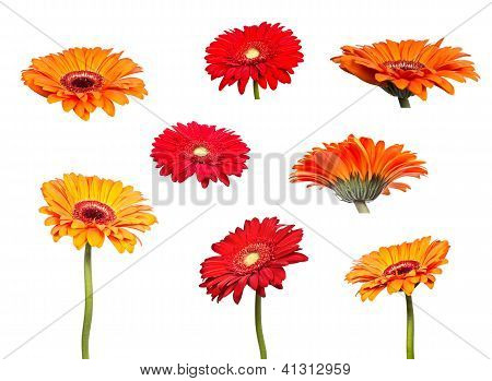 Collage Flowers Of Orange Gerbera