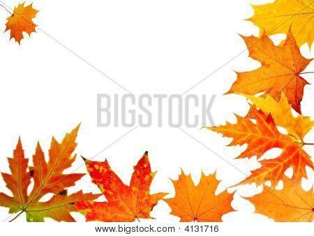 Herbst Ahornblatt